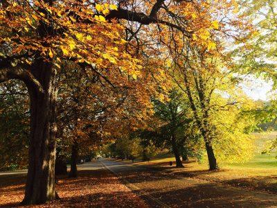 autumn in a London park
