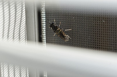 window screen at home